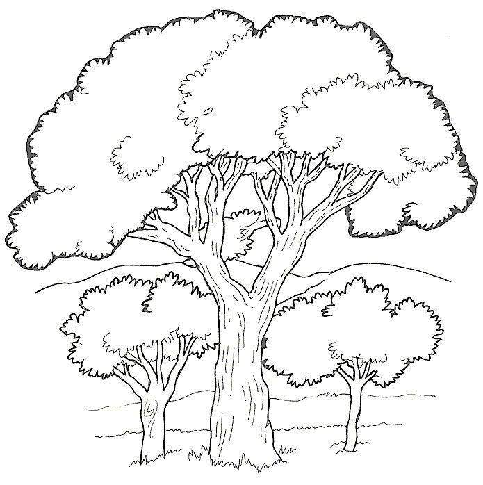 Dibujos Para Pintar De 225 Rboles Dibujos Para Colorear De Beautiful Trees Coloring Page