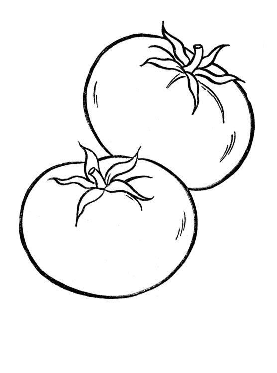 Tomates also Star Wars R D Coloring Pages further Cardboard Orange Tree Project in addition Farmer Fruits Coloring Page also Nutrition Facts Belgian Endive. on fruit coloring pages